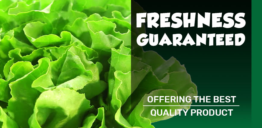 Freshness Guaranteed